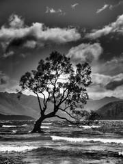 FototapetaFree tree on the wanaka lake