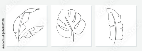 One Line Drawing Vector Monstera Leaf And Banana Tree Leaves Modern Single Line Art Aesthetic Contour
