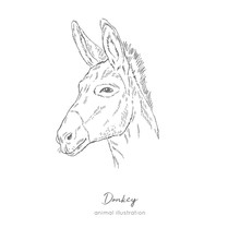 Side View Vector Portrait Illustration Of Donkey Farm Animal Hand Drawn Ink Realistic Sketching Isolated On White. Perfect For Agriculture Farm Logo Branding Design.