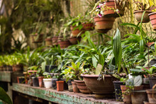 View Of An Old Tropical Greenhouse With Evergreen Plants, On A Sunny Day With Beautiful Light. Rack With Tropical Plants In The Botanical Garden.