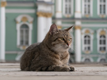 Gray Tabby Cat Lies On The Deck In The Background Of The Baroque Palace. Gray Tabby Striped Cat Came To The Palace Square In St. Petersburg. The Museum Cat Lies On The Deck And Looks Away.