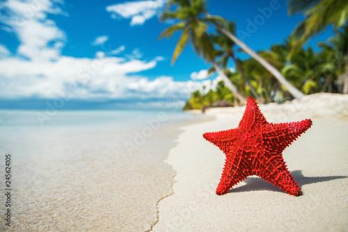 Seastar or sea starfish standing on the beach of island Saona near Punta Cana resort, Dominican Republic Canvas Print