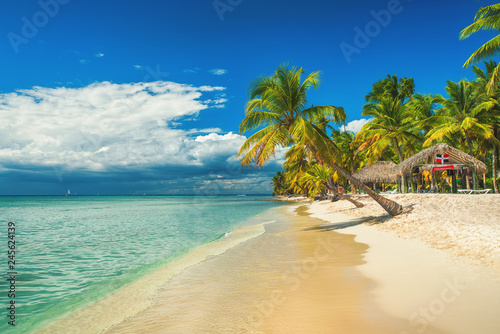 Palm trees on the tropical beach, Dominican Republic. Saona island.