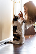 Calico Cat Standing Up On Hind Legs Asking For Food Meat Treat In Room Doing Trick With Front Paw And Happy Owner Woman Face Hand Feeding