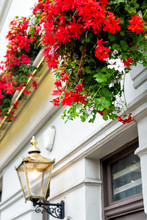 London, UK Neighborhood District Of Kensington Chelsea With Red Color Vibrant Colorful Flower Decorations And Building Closeup Of Lamp Lantern Historic Traditional Architecture