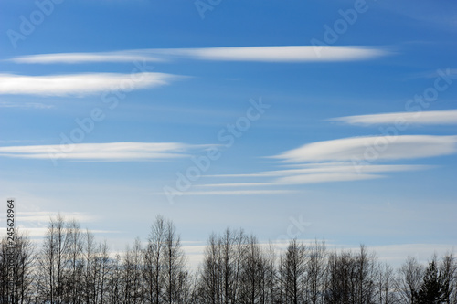 Blue sky with Altocumulus clouds. Trees in front. Canvas Print
