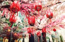 Red Chinese Lanterns And Sakur...