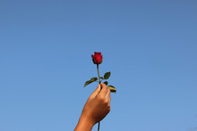 Red Rose In Human Hand With  Blue Sky In Sunny Day Background Gift For Love In Valentine Day To Special Person
