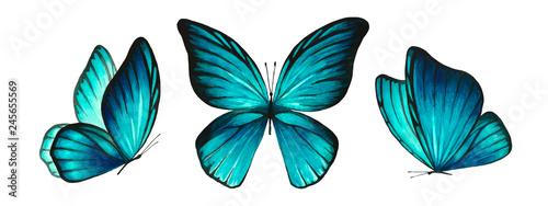 Fotografía  Three watercolor light blue bright butterflies