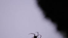 Spider At Night Crawling Into Frame