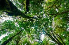 Rain Forest Doi Inthanon Cloud Forest Chiang Mai Thailand
