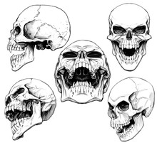 Set Of Skulls With Fangs