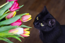 Cat With Flowers Tulips