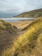 Sand Dune Grasses Swaying In The Breeze At Saunton Beach In North Devon , England