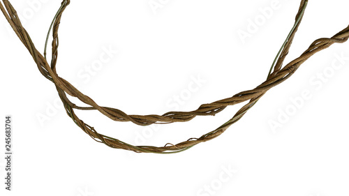 Twisted jungle vines, tropical rainforest liana plant isolated on white background, clipping path included Canvas Print