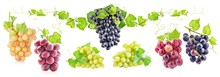 Collections Of Ripe Grapes Wit...