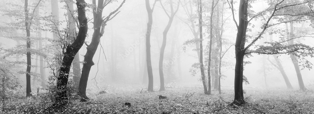 Fototapeta Foggy Forest in Autumn, Black and White Panorama