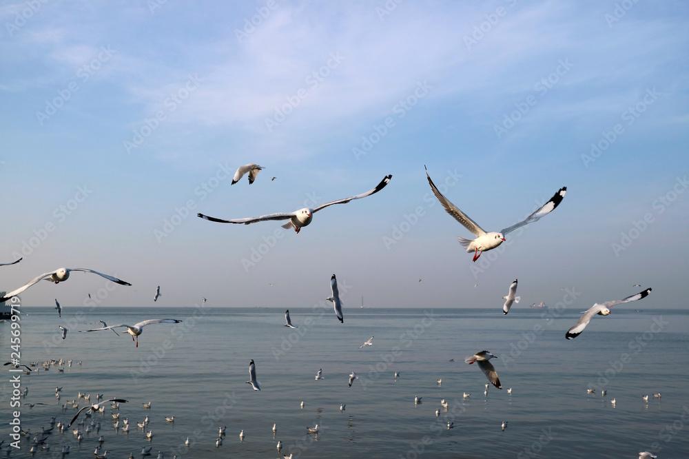 Uncountable Wild Seagulls Flying over the Sea of Bang Pu Beach, Samutprakarn Province, Thailand