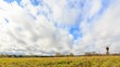 Young grass on a background of clouds in spring. Slider HDR Time Lapse