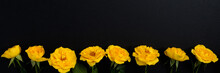 Yellow Flowers On A Black Background. Spring, Easter, Sunny Mood.