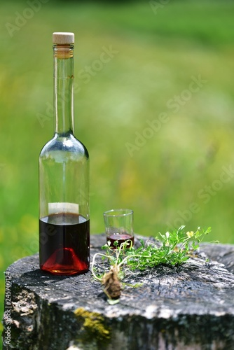 Blutwurz (Potentilla erecta) Spirituose und Blutwurzpflanze