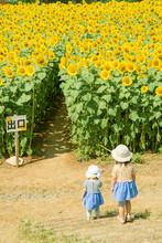 ひまわり畑の少女 ジブリの世界