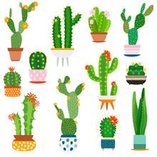 Cactus Pots. Home Plants Cacti...