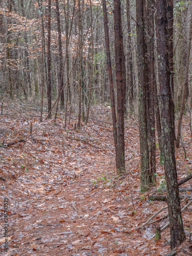 path in the forest leading to Salt Creek Falls in Talladega National Forest, Alabama, USA