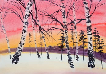 Panel Szklany Brzoza winter sunset pine and birch