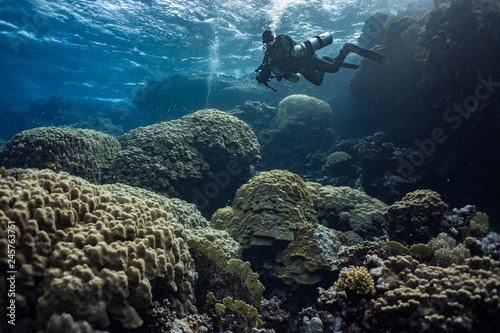Poster Coral reefs Diver on coral reef in Sataya in Red Sea