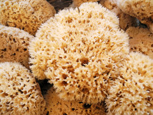 Natural Sea Sponges With Clipp...