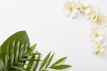 Beautiful Composition Of Greenery And Little White Flowers On White Background With Empty Space In Middle For Your Information
