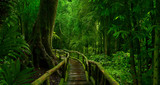 Fototapeta Bambus - Asian tropical rainforest