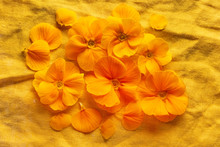 Orange Primroses On The Orange Linen Fabric