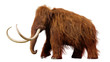 canvas print picture woolly mammoth, walking prehistoric animal isolated on white background (3d illustration)