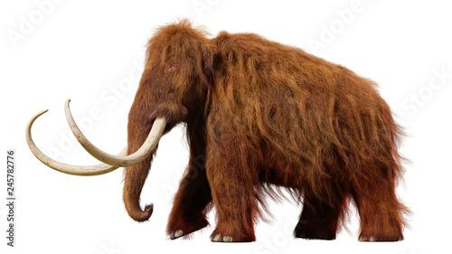 Fotografie, Obraz woolly mammoth, walking prehistoric animal isolated on white background (3d illu