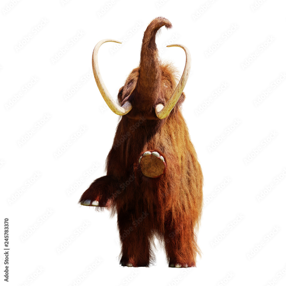 woolly mammoth standing on two legs, extinct prehistoric animal isolated on white background (3d illustration)