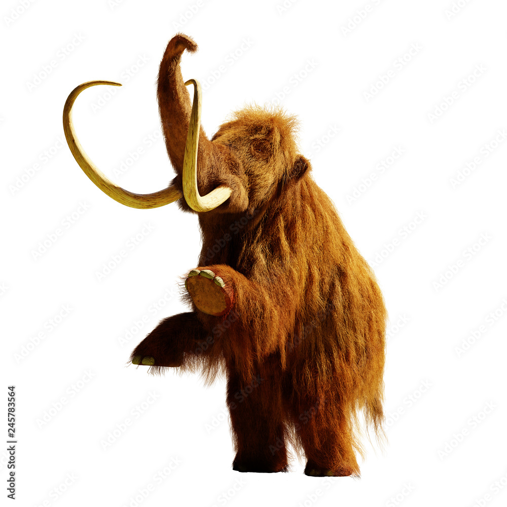 woolly mammoth standing on two legs, extinct prehistoric animal isolated with shadow on white background (3d rendering)