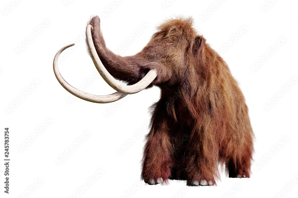woolly mammoth, extinct prehistoric animal isolated on white background (3d illustration)