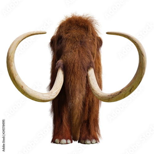 woolly mammoth, extinct prehistoric elephant species isolated on white background, front view Fototapete