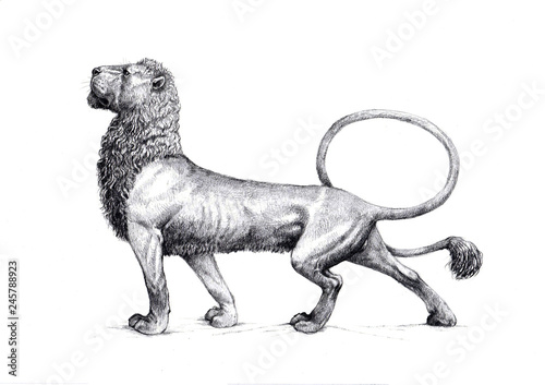 Fototapeta Lion hand made drawing. Antique style illustration.