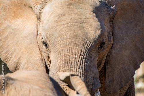 Photo  Elephant close-up