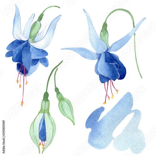 Slika na platnu Blue fuchsia botanical flower