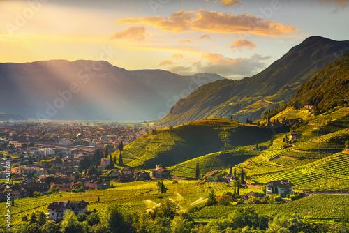 Foto auf Leinwand Honig Vineyards view in Santa Maddalena Bolzano. Trentino Alto Adige Sud Tyrol, Italy.