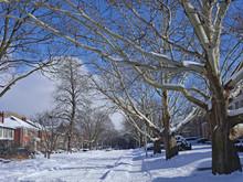 Tree Lined  Residential Street In Winter