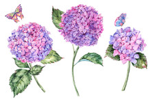 Watercolor Summer Bouquet With Pink Hydrangea And Butterflies