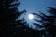 Large Bright Moon Nestled Betw...