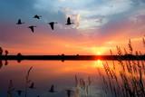 Fototapeta Fototapety z naturą - Sunset Geese
