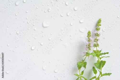 Obraz Mint flowers with water drops   - fototapety do salonu