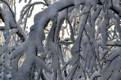 Branches fully covered in snow